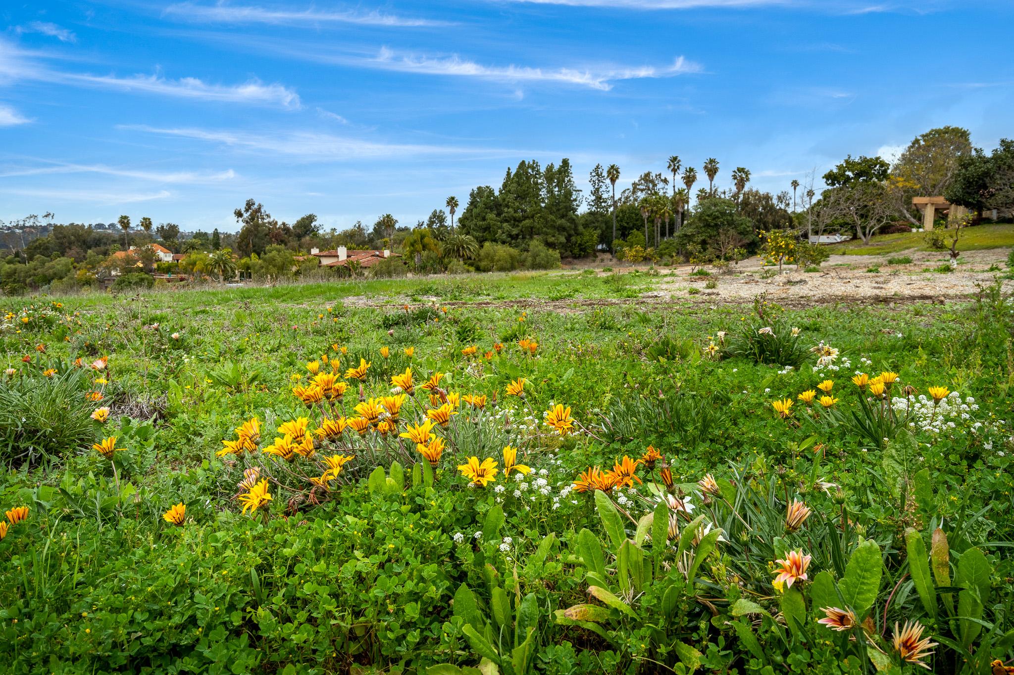 Los Morros -  Rancho Santa Fe, CA 92067